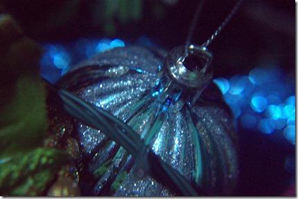 Close up Christmas 052.ARW