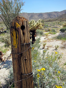 Old cattle fence post in Rockhouse Cayon - Anza Borrego