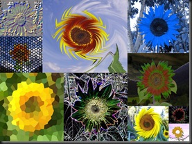 10 10 10 Sunflowers4