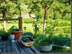 I plant lots on containers on and around deck from flowers to herbs and vegetable