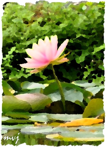 Secret retreat lotus flower symbol of spiritual unfoldment the lotus flower is one of the most ancient and deepest symbols of our planet it grows in muddy water and rises above the surface to bloom with remarkable mightylinksfo