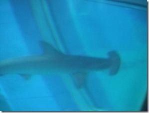 Aquarium 022