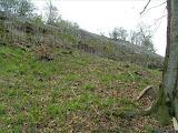 Wanderung zum Kleinen Gleichberg, Vegetation - Ende April