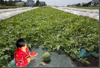 Watermelon field prachi