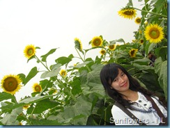 Sunflower Garden (13)