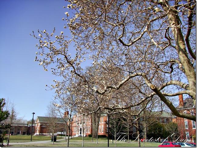 Magnolia campus