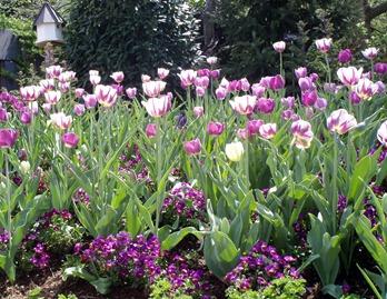 Botanical Gardens 20