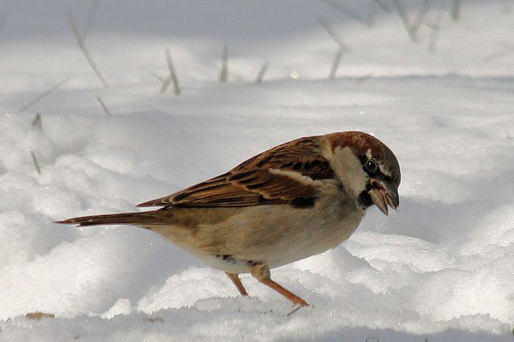 les oiseaux du jardin (fil ouvert) _MG_1536mod