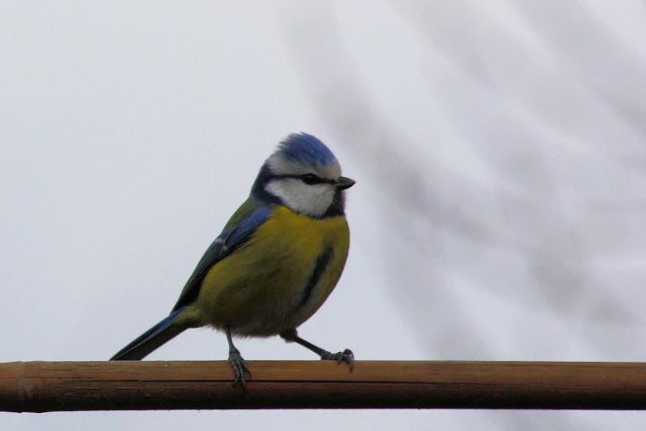 les oiseaux du jardin (fil ouvert) _MG_1607mod