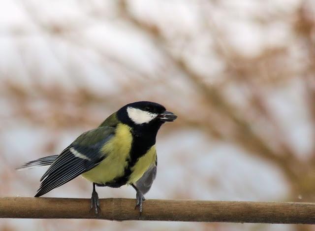 les oiseaux du jardin (fil ouvert) _MG_1465mod