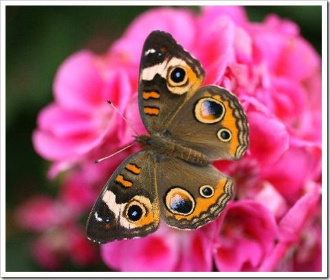 Butterfly 2 KB