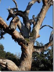 Cai's Tree