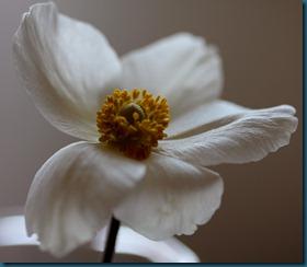 hvit blomst5