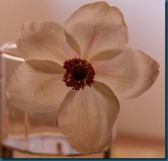 hvit blomst1