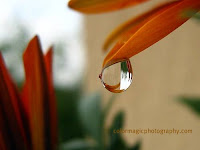 Raindrop on flower petal-macro close up