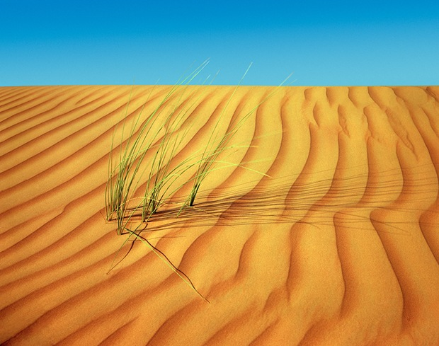 Grass-on-desert-sand
