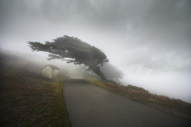 Road-in-mist in california