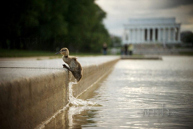 little-bird-on-lake at the The Lincoln Memorial,Washington, DC 20037