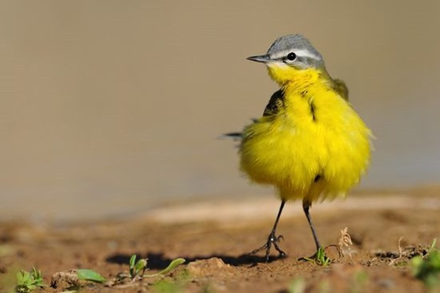Wildlife-photography-of-birds2