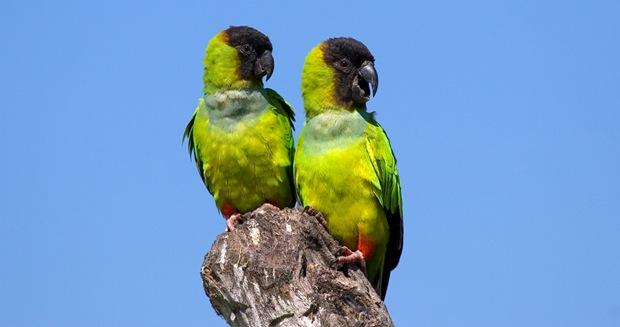 Wildlife-photography-of-birds-Principe-Negro
