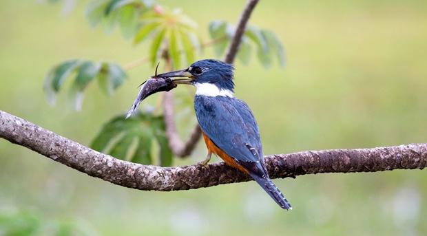 Beautiful-birds-photography-Martim-Pescador