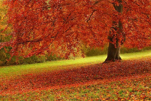 Mind Blowing Fall Photo for This Autumn Seen  On www.coolpicturegallery.us