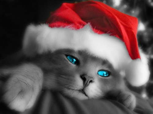 HD- Christmas-desktop-wallpapers-Cat