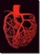 Szívkoszorúerek másolata