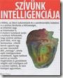 Szívünk intelligenciája