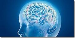 Az agy táplálékai_2