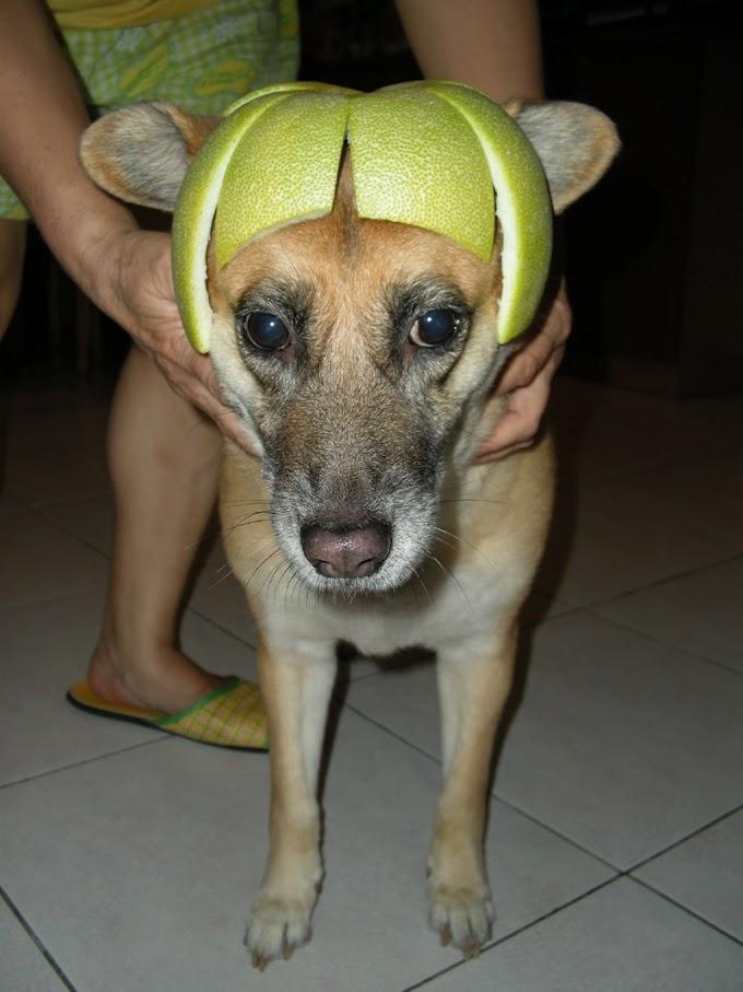 阿金嬸:中秋柚子帽