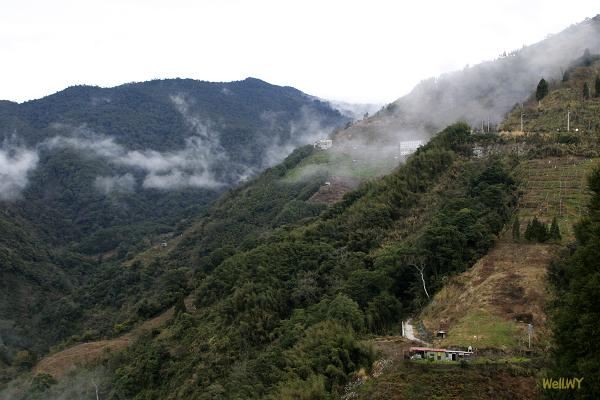 2011春‧部門旅遊:雲莊山嵐 + 拉拉山神木