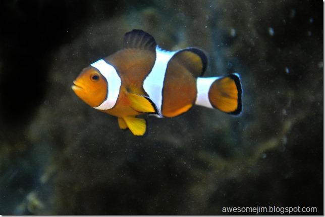 fishone1