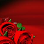 Red_Roses.jpg