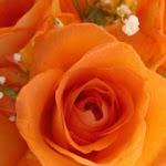 Flower_2000.jpg