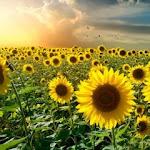 Flower_3072.jpg