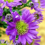 Flower_3932.jpg