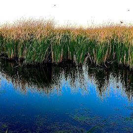 Flooded marsh in South Dakota by Tyrell Heaton - Instagram & Mobile iPhone ( flooded marsh in south dakota )