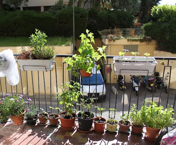 un potager sur mon balcon nice au jardin forum de jardinage. Black Bedroom Furniture Sets. Home Design Ideas