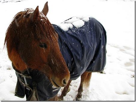 snowodin