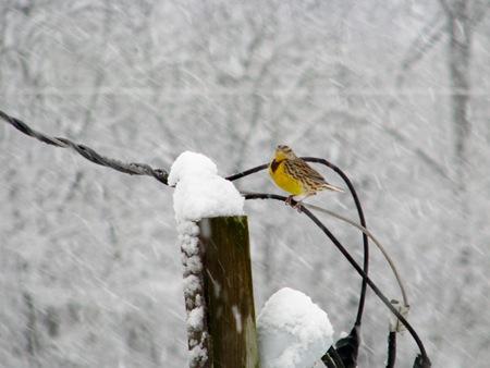 snowbirdwire