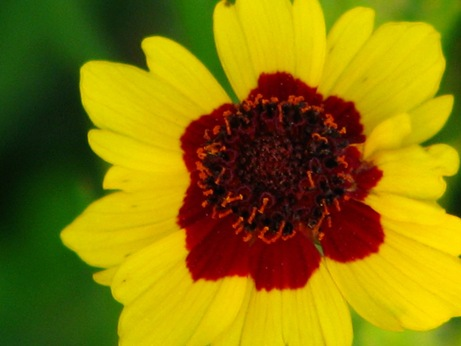yellowredflower