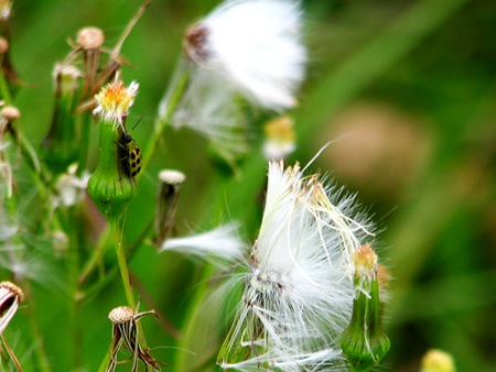 yellowdotbug