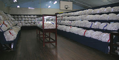 800px-Wool_display.JPG