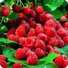 raspberry1