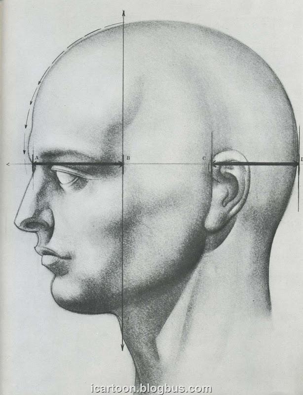 动态素描 头部结构06