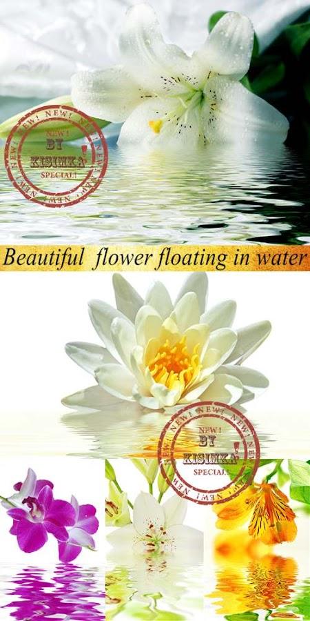Красивые цветы и их отражение в воде. Beautiful flower floating in water