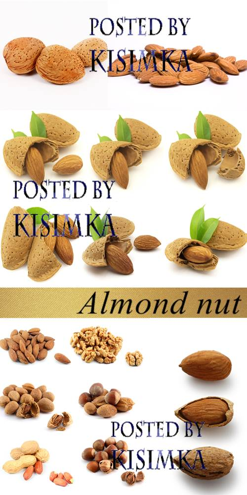 Stock Photo: Almond nut