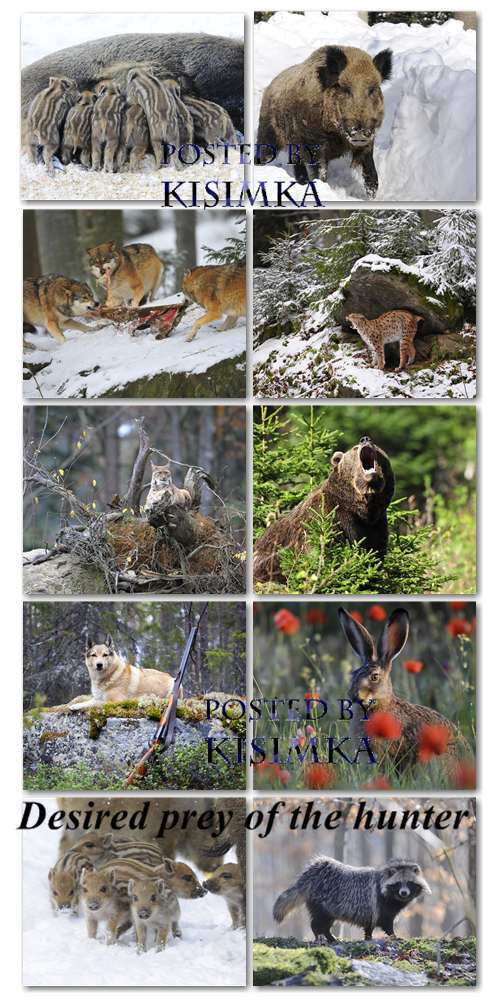 Stock Photo: Desired prey of the hunter