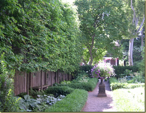 Curb Appeal The Best Privacy Trees What To Plant If You